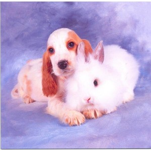 Spaniel Puppy and Fluffy White Rabbit